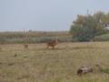 Bronstige herten 05